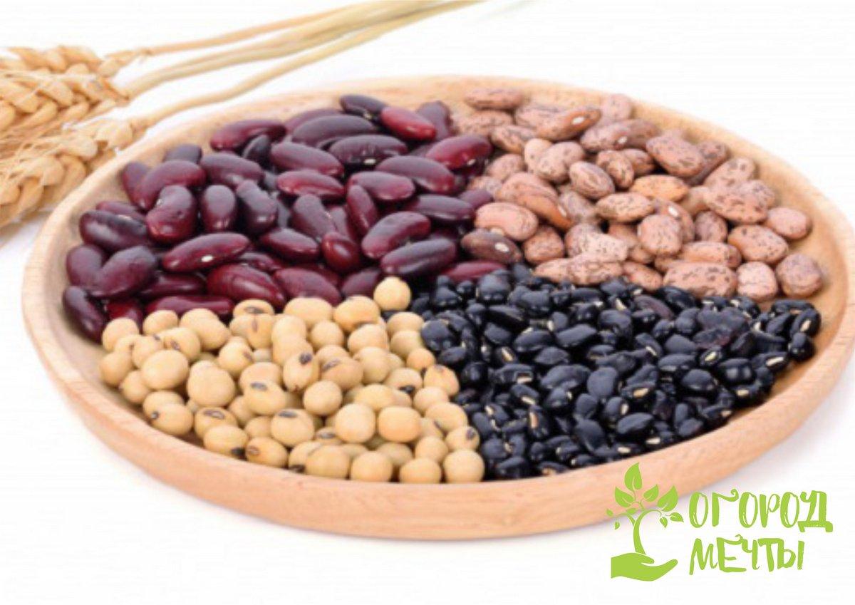 Кустовая фасоль: нюансы выращивания и список лучших урожайных сортов
