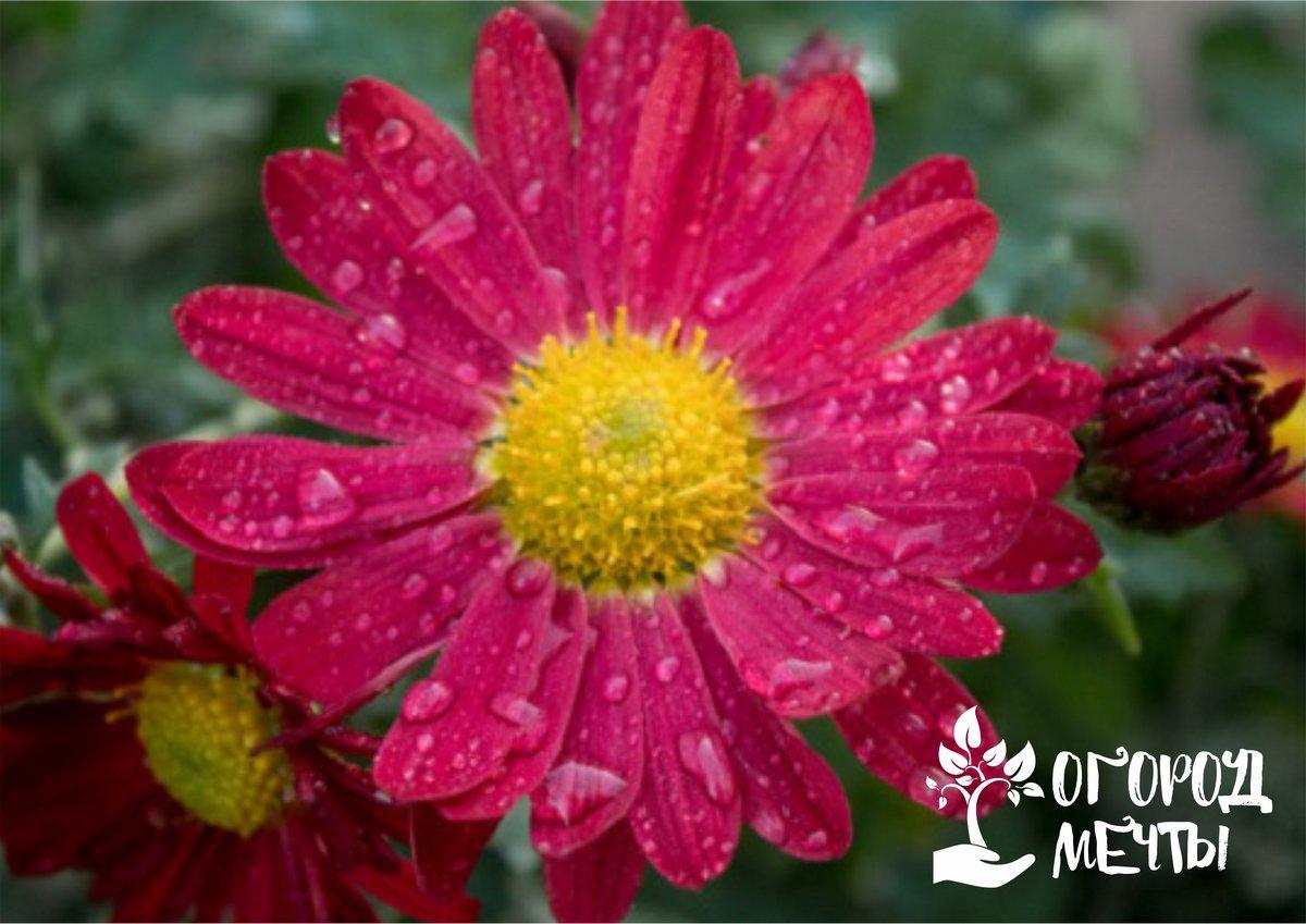 Самые красивые клумбы на Урале! Лучшие многолетние цветы для северных регионов