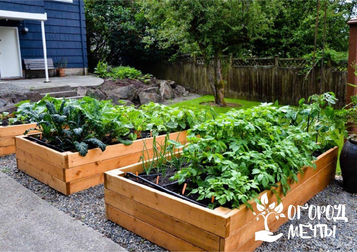 Чем огородить грядки в саду и на огороде: топ-5 вариантов