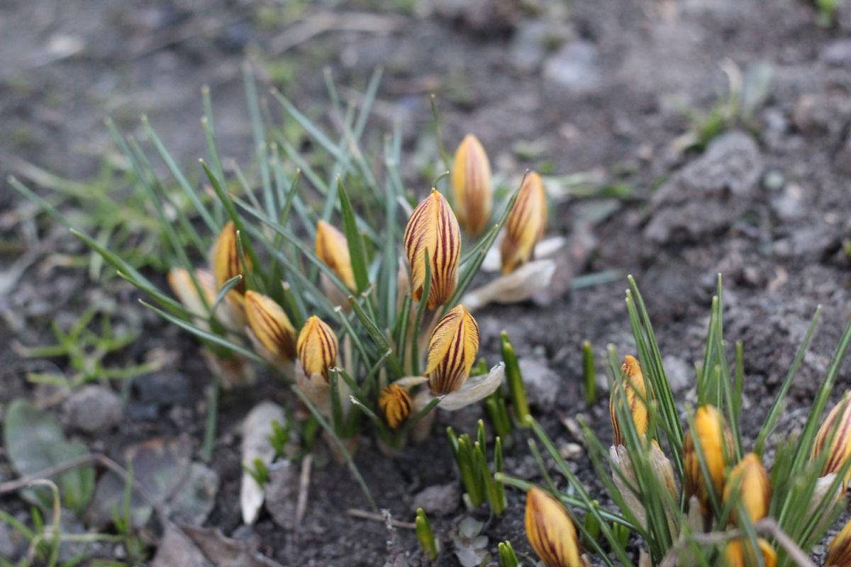 Цветник в апреле: самые важные мероприятия