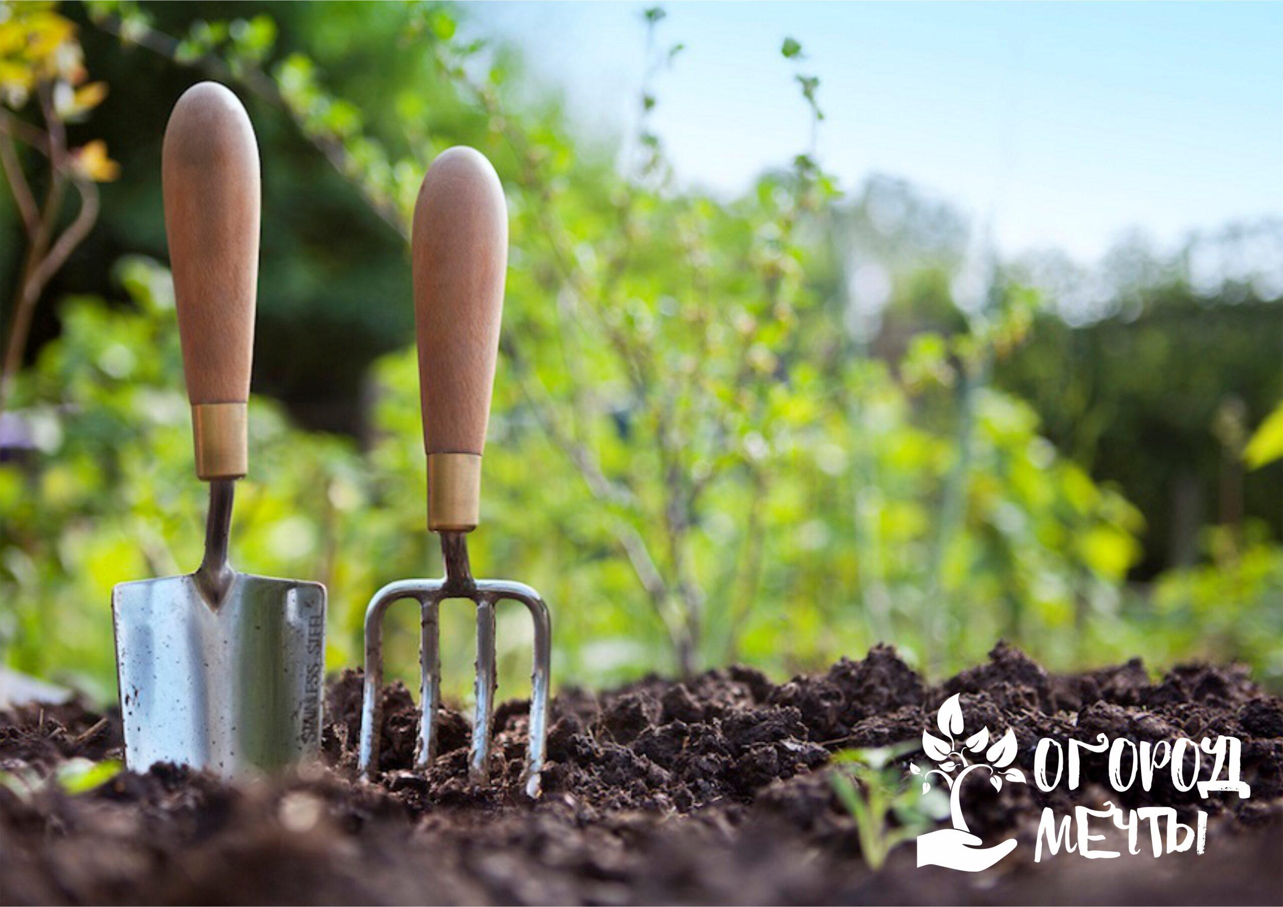 Самые важные мероприятия в огороде и июне