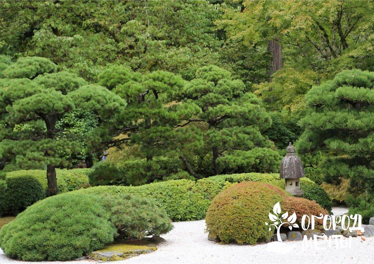 Как сделать сад в японском стиле максимально эстетичным? Оформите его этими вариантами традиционного декора!
