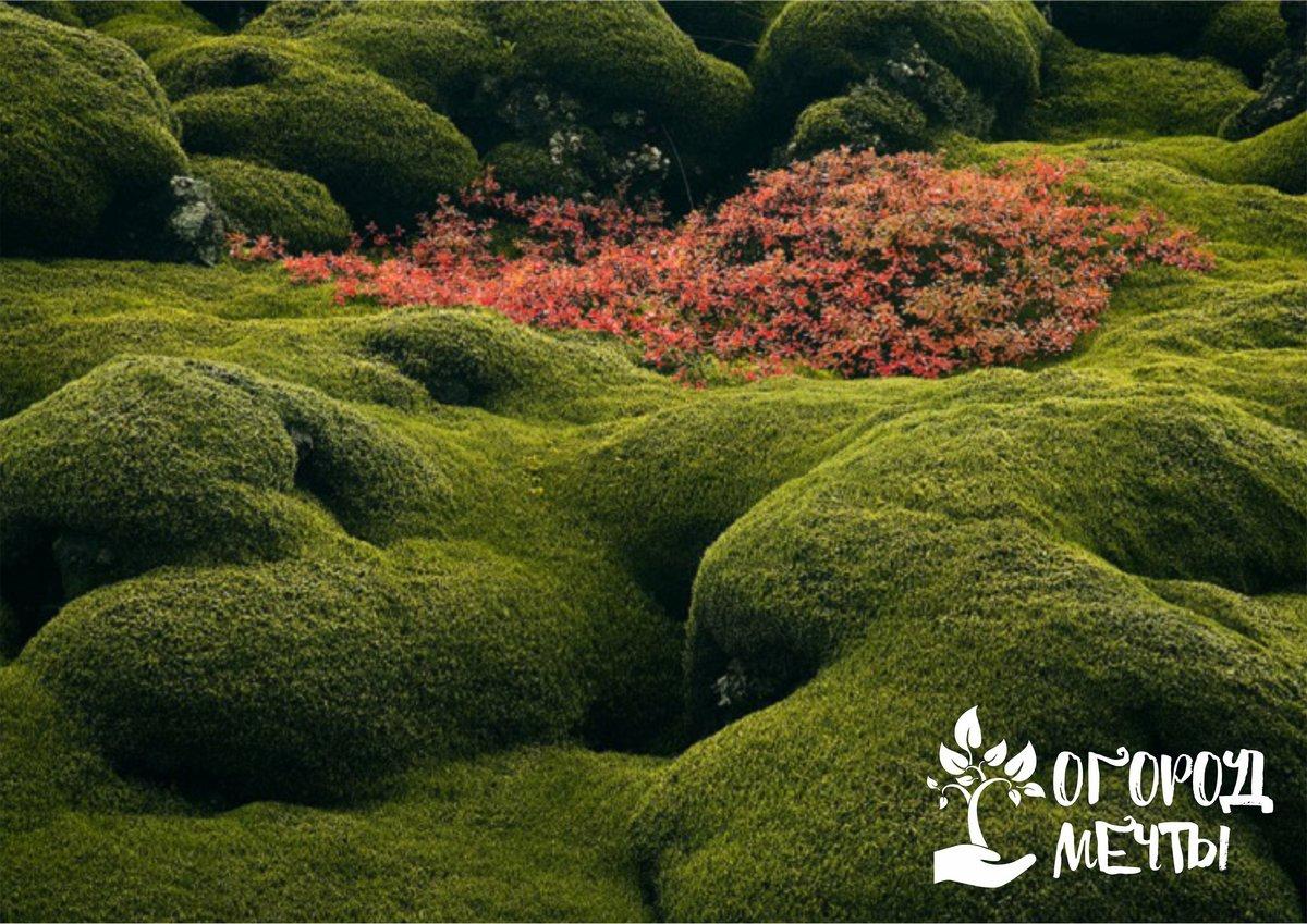 Стильный эксклюзив в саду, который поразит ваших гостей! Изысканный сад мхов: тонкости оформления композиции