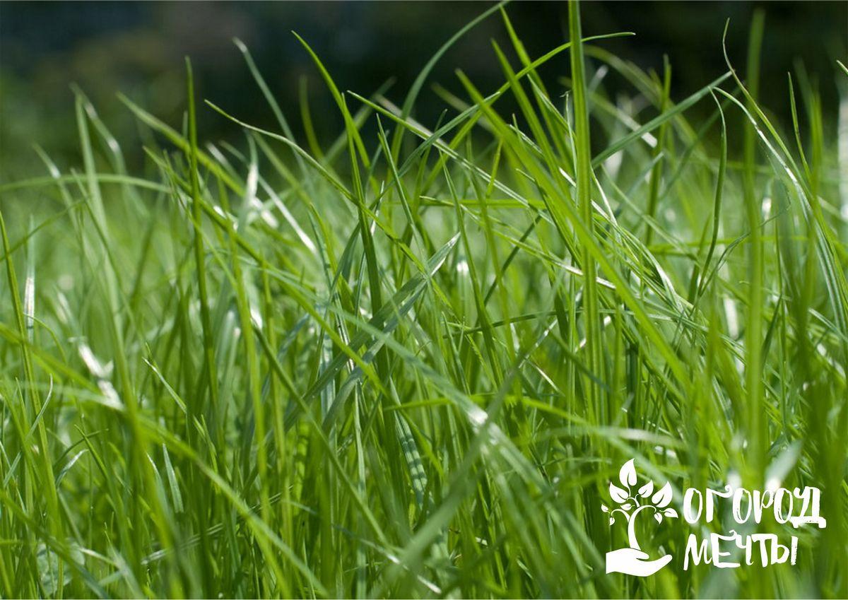 Календарь ухода за газонной лужайкой лето-осень 2021