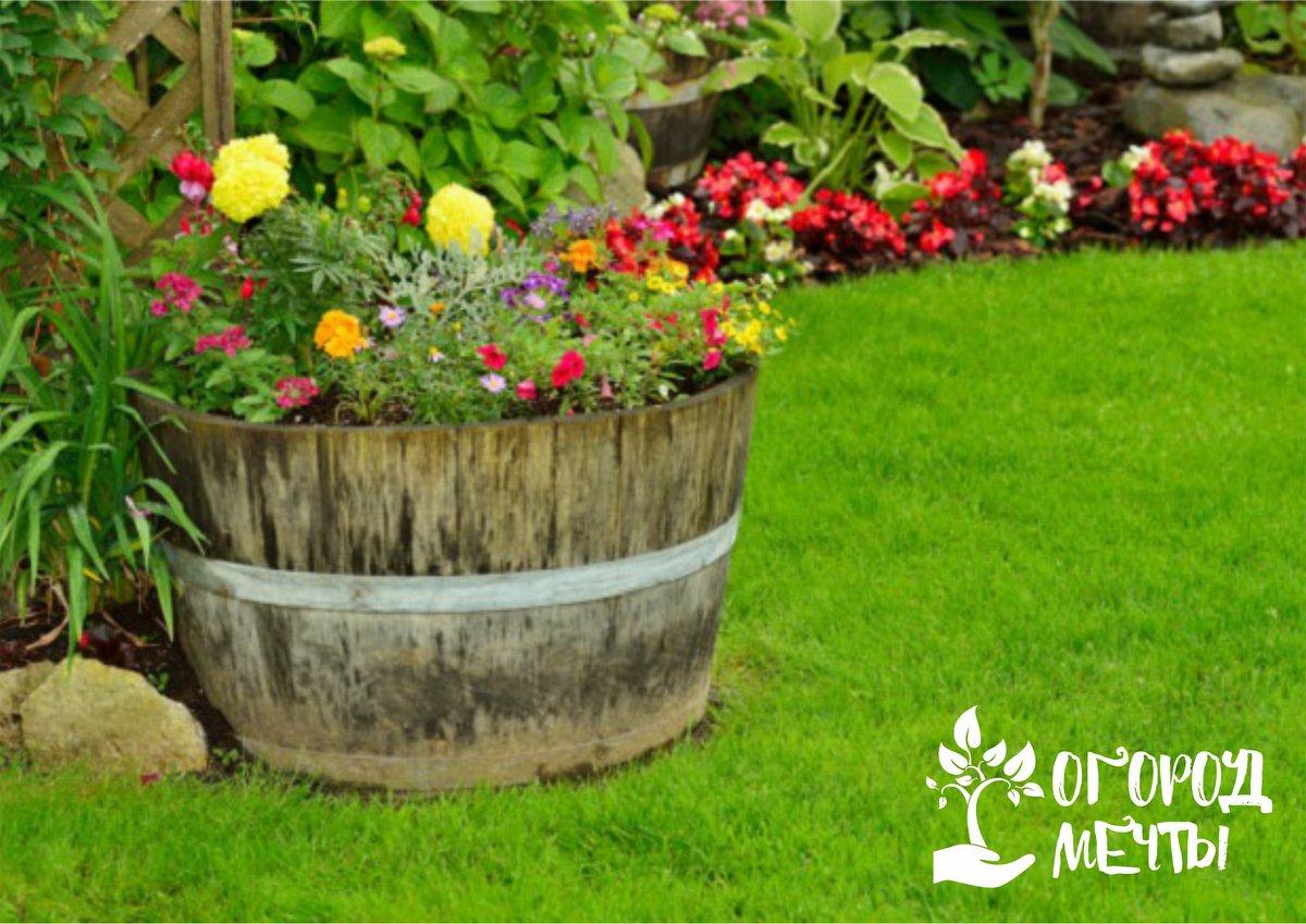Уход за цветами летом: самые важные мероприятия в июне