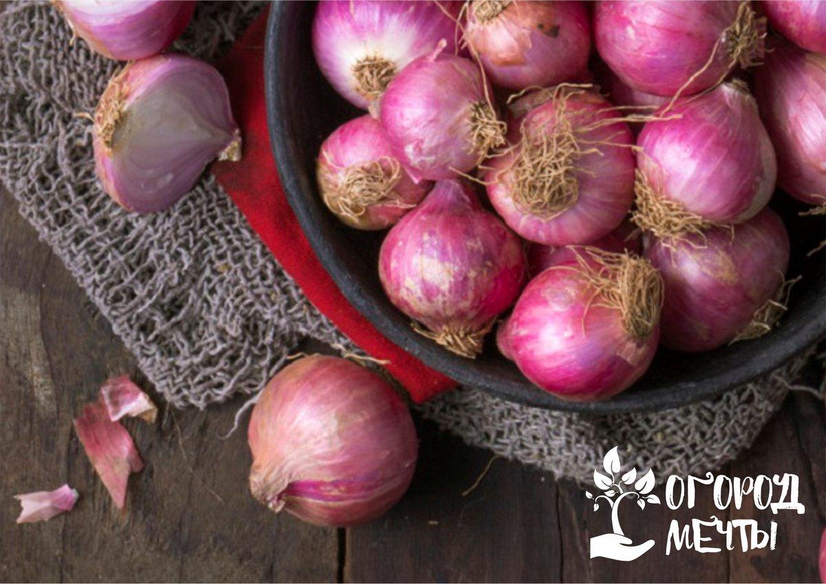 Сладкий и вкусный лук: топ-7 сортов