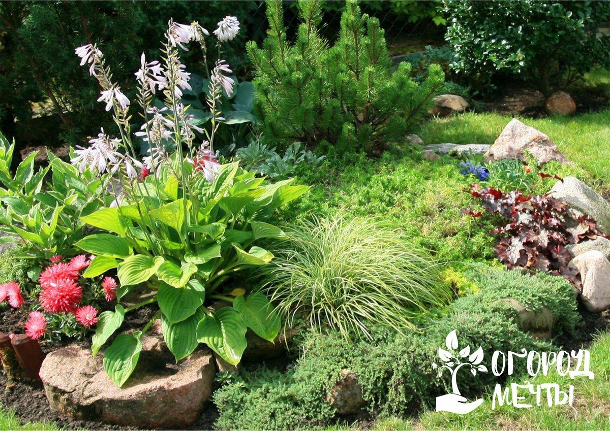 Лучшее украшение для солнечного рокария! Топ-10 красивых декоративных растений для каменистых горок