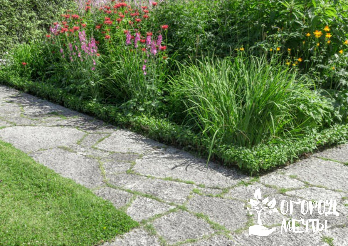 Лучшие почвопокровные культуры для украшения садовых дорожек: топ-8 разновидностей