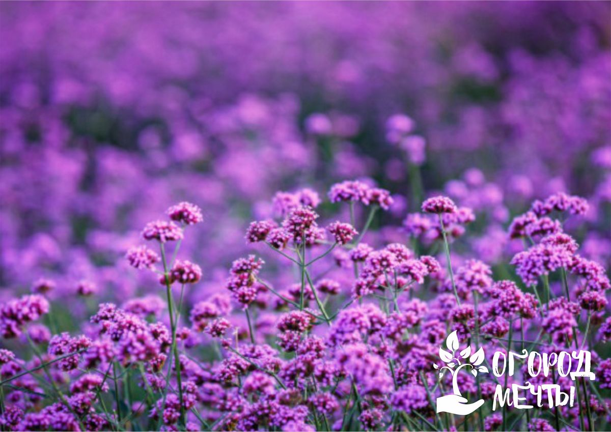 Посадка цветочной культуры