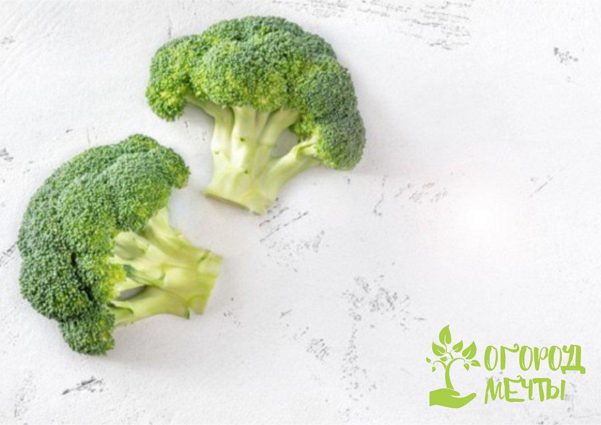 Витаминная, полезная и вкусная брокколи – основа диетического питания! Представляем десять самых урожайных сортов популярного суперфуда!