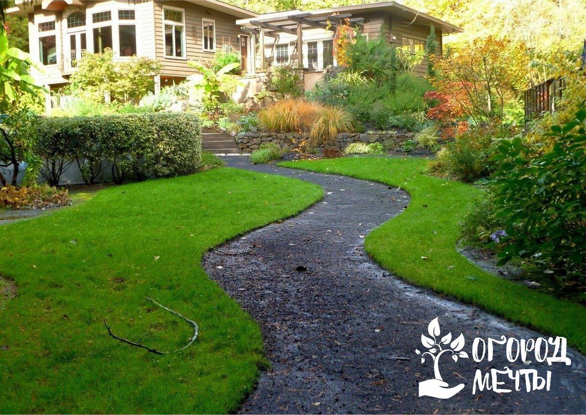 Почвопокровники у дорожек могут стать фишкой вашего сада