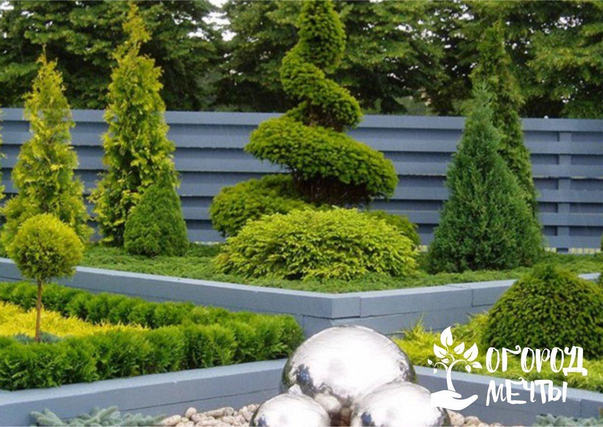 Настоящее украшение для дачного участка! Шесть лучших видов хвойных растений для украшения придомовой территории, альпийской горки, сада и рокария