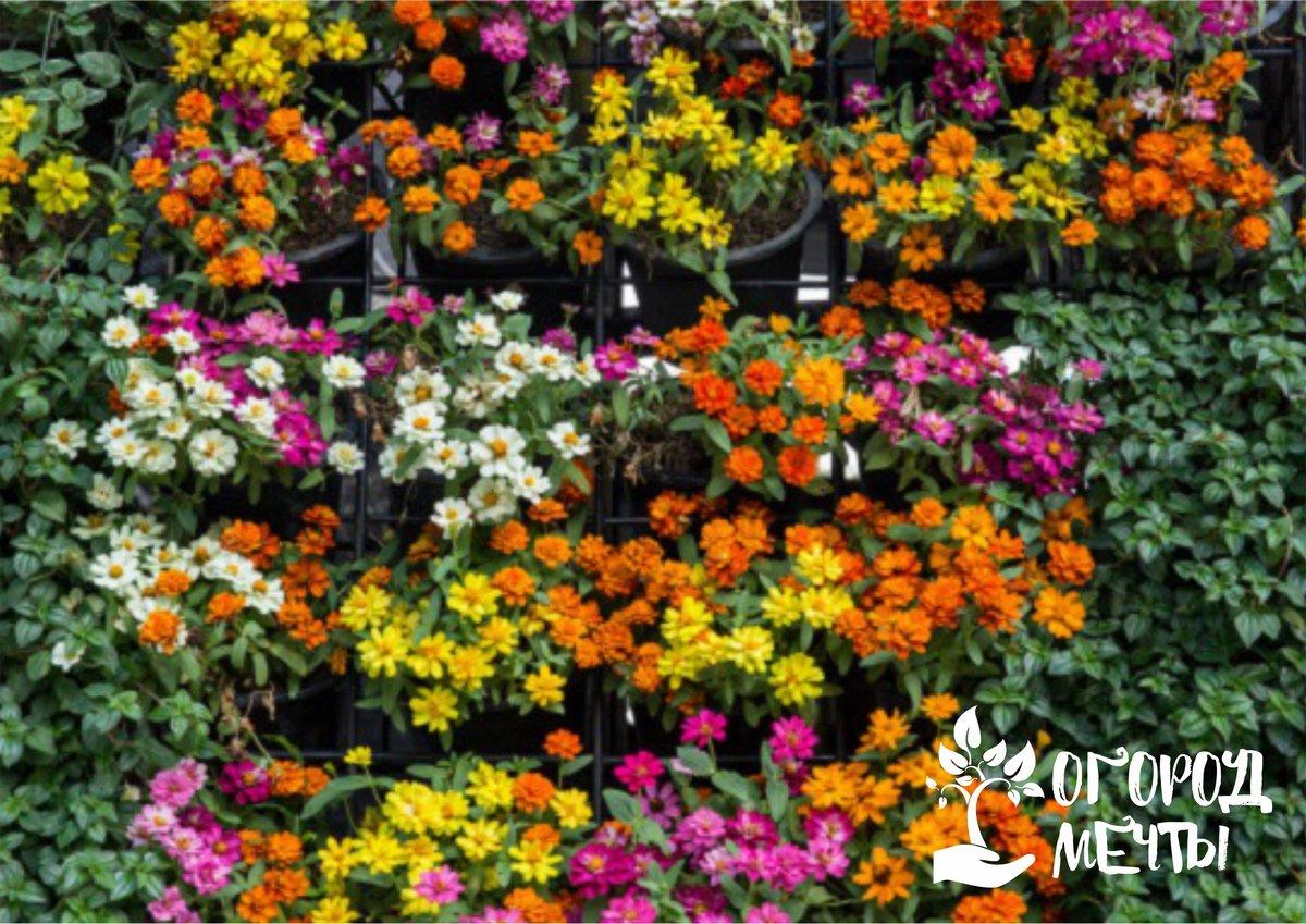 Стильная находка для дачного участка! Вертикальный сад - это то, что может удивить и очаровать каждого!