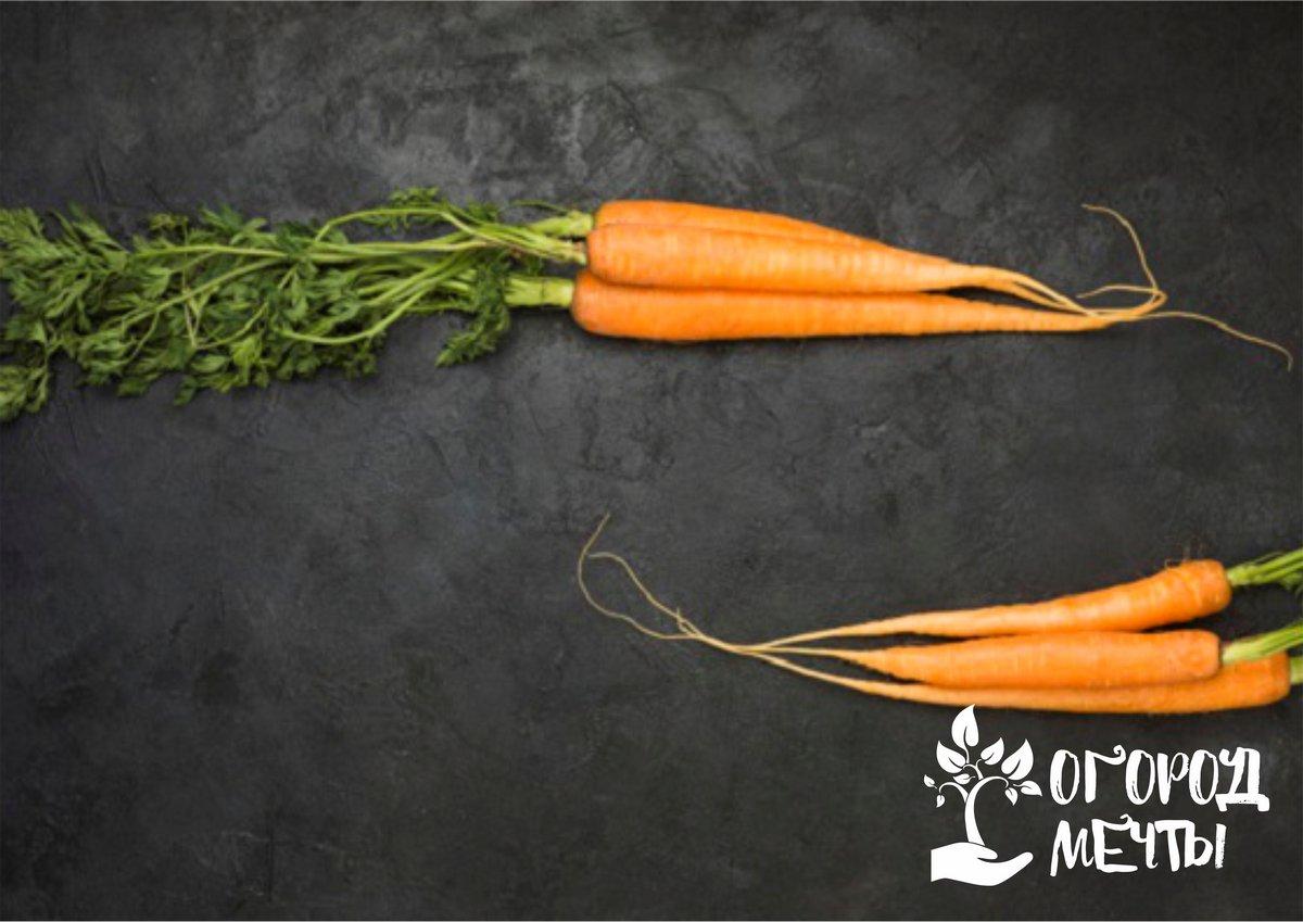 необходимо сделать бороздки на грядке и распределить семена вручную