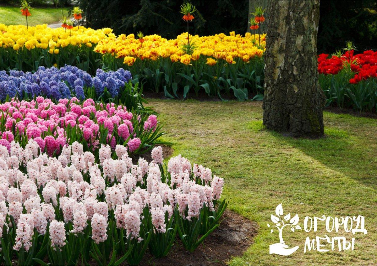 Как только эти декоративные кустарники начнут отцветать, следует провести обрезку старых побегов и вялых соцветий
