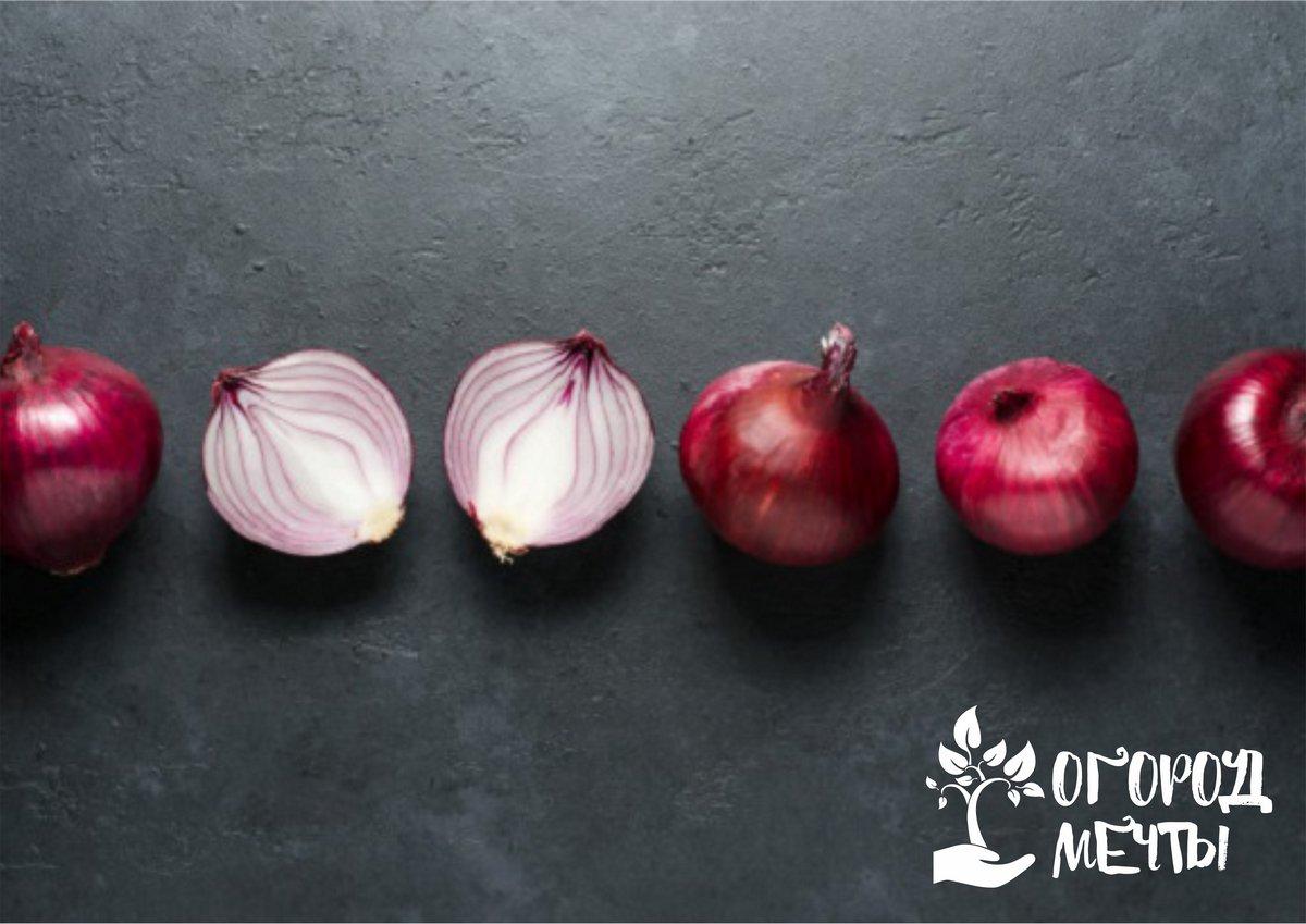Яркий ингредиент для салатов и очень вкусная закуска! Представляем вам семь лучших сортов сладкого красного лука!