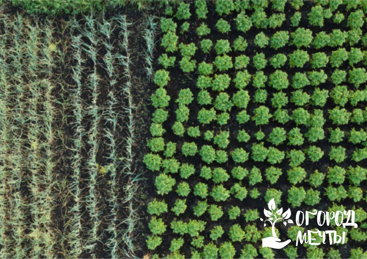 Уход за огородом в июне: календарь важных дачных мероприятий