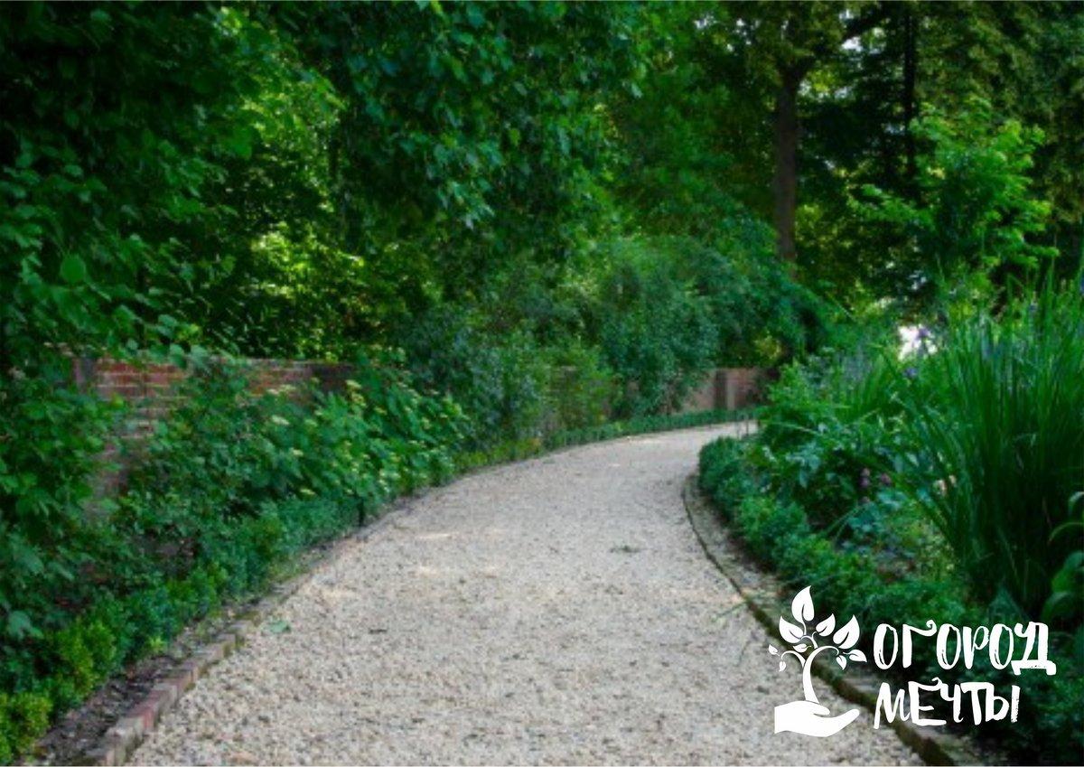 Самое популярное оформление для садовых дорожек! Список лучших почвопокровников для украшения тропинок на даче