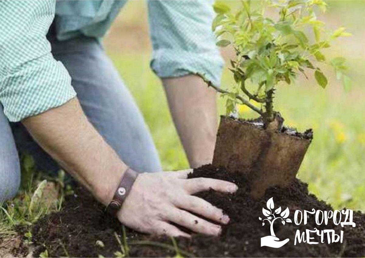 Качественные саженцы - красивый сад! Как выбрать хорошие саженцы декоративных кустарников: советы и рекомендации