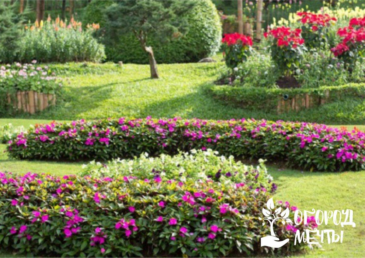 Необходимо продолжать уход за розами в саду