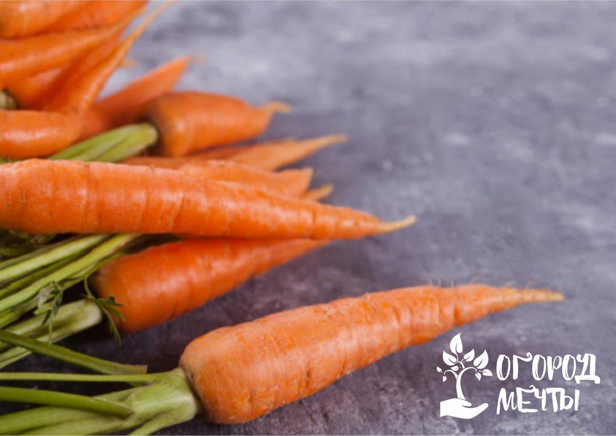 Качественный урожай гарантирован, если вы посеете морковь следующими способами! Топ-7 вариантов посева морковных семян