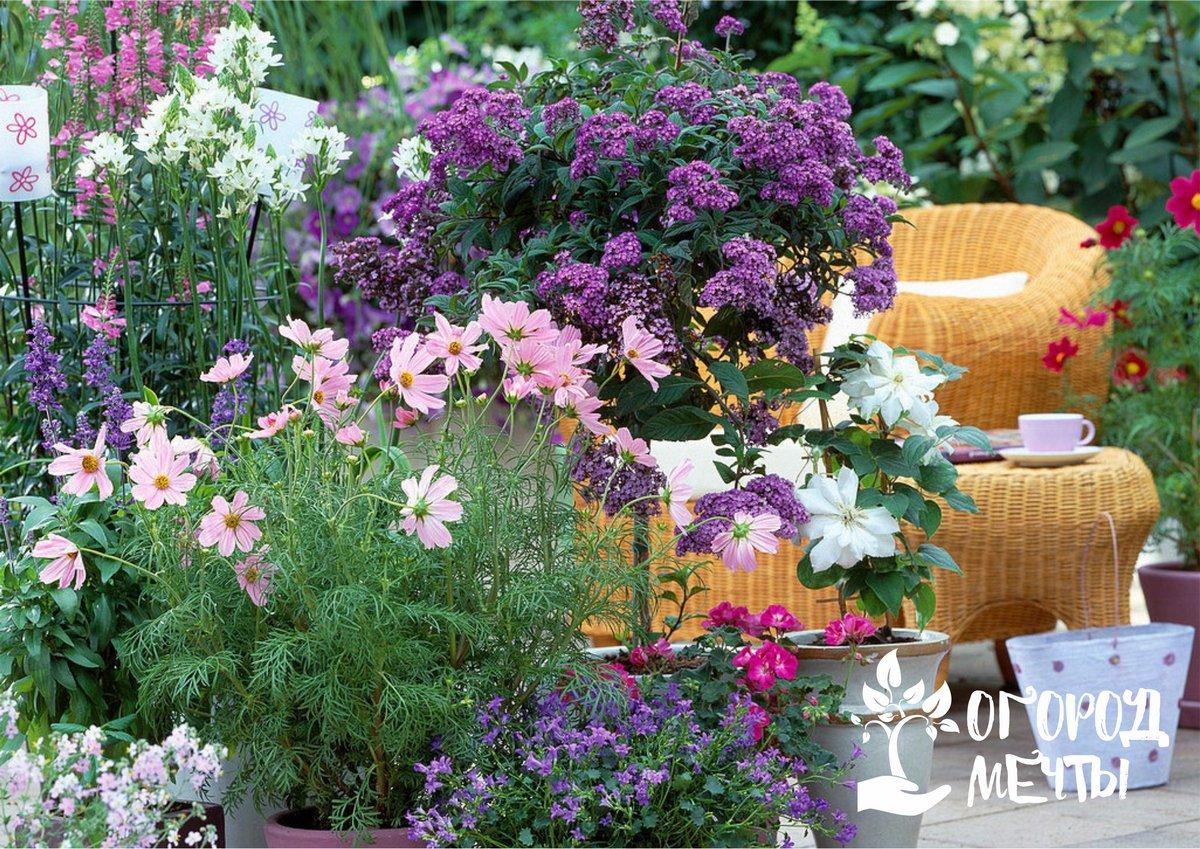 Клематисы в контейнерах – красивое украшение для сада, патио и террасы