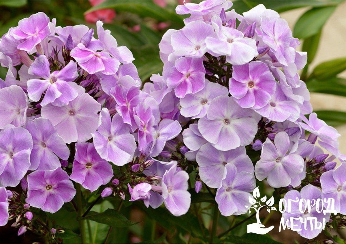 Десять самых неприхотливых цветов для начинающего дачника: самые выносливые и простые в выращивании