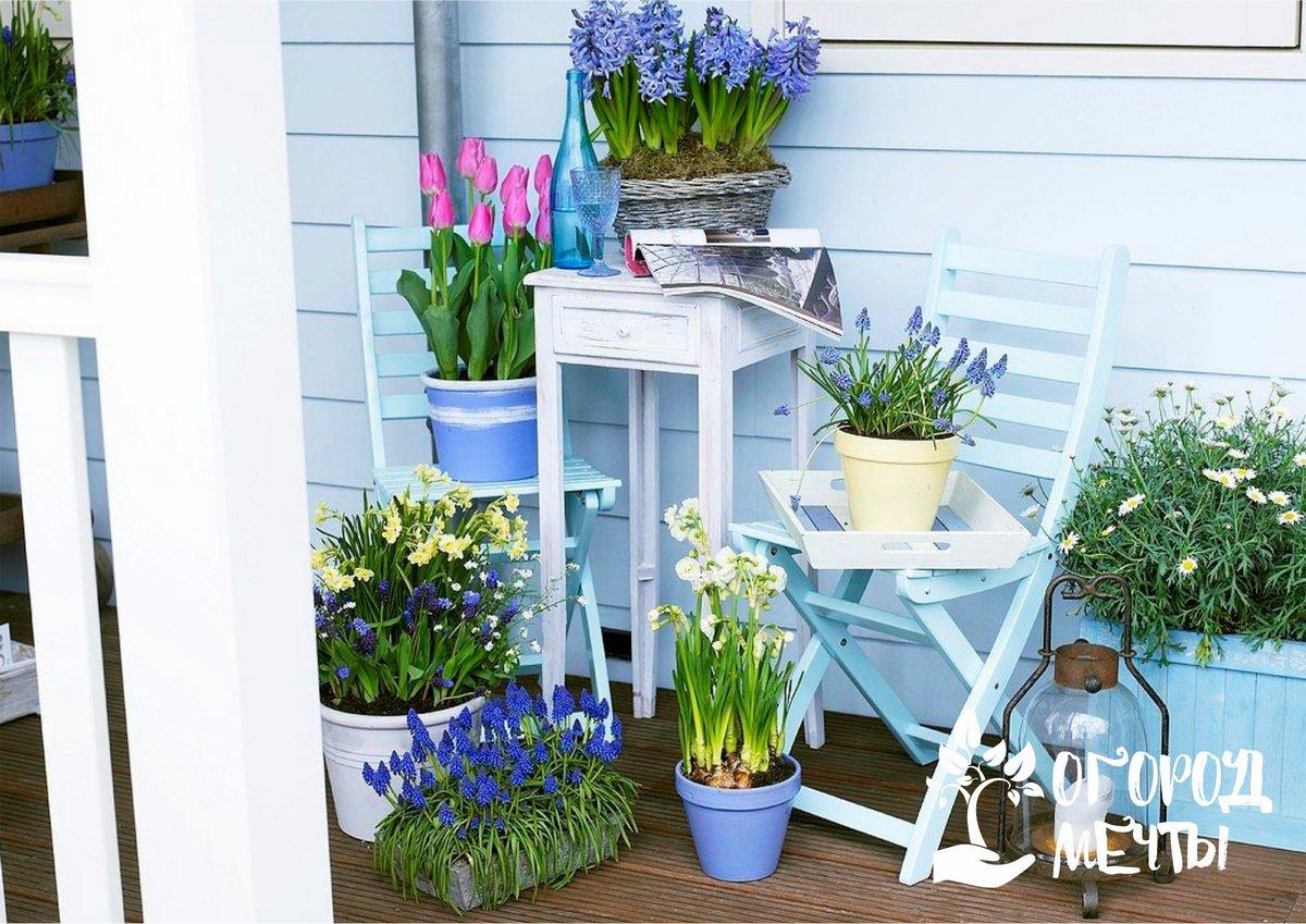 Как украсить балкон дачного домика: пять самых красивых растений с обильным цветением