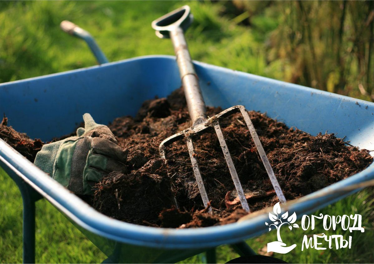Данные способы использования компоста безопасны для растений
