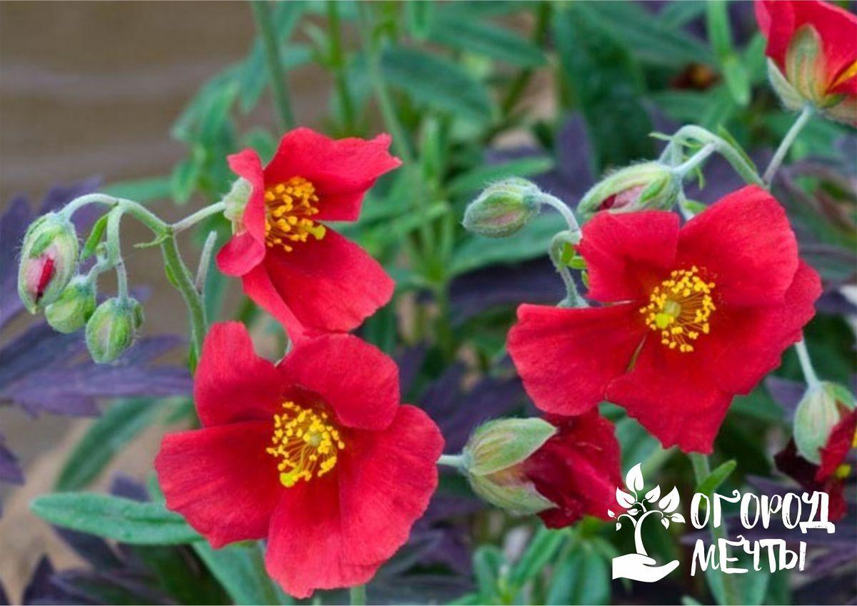 Ампельные цветы для украшения сада: шесть ярких композиций