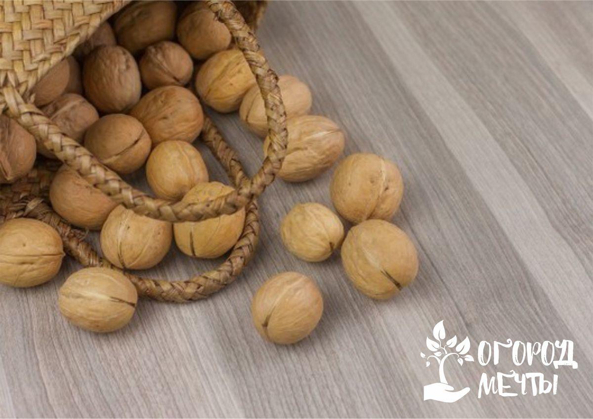 Топ-8 лучших сортов вкусных грецких орехов для дачи