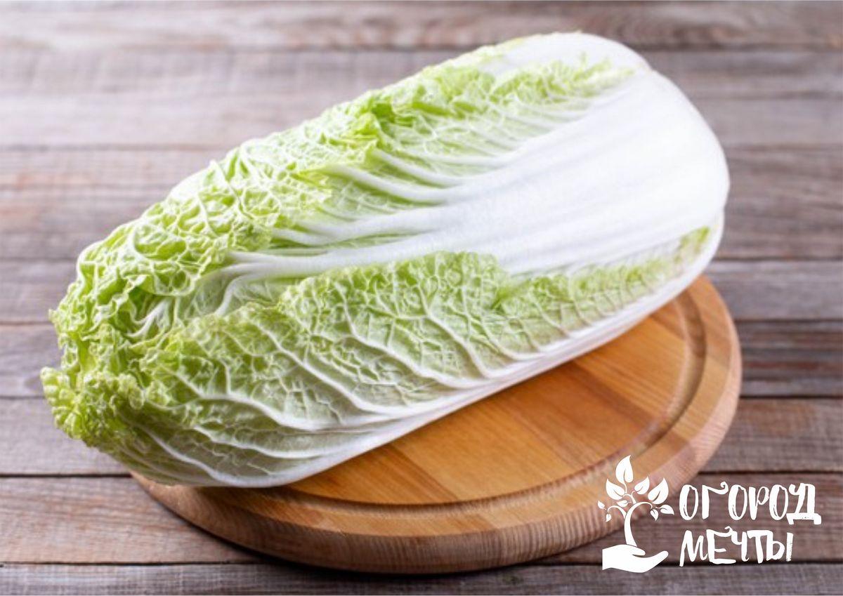 Домашняя пекинская капуста: топ-7 лучших сортов для дачи