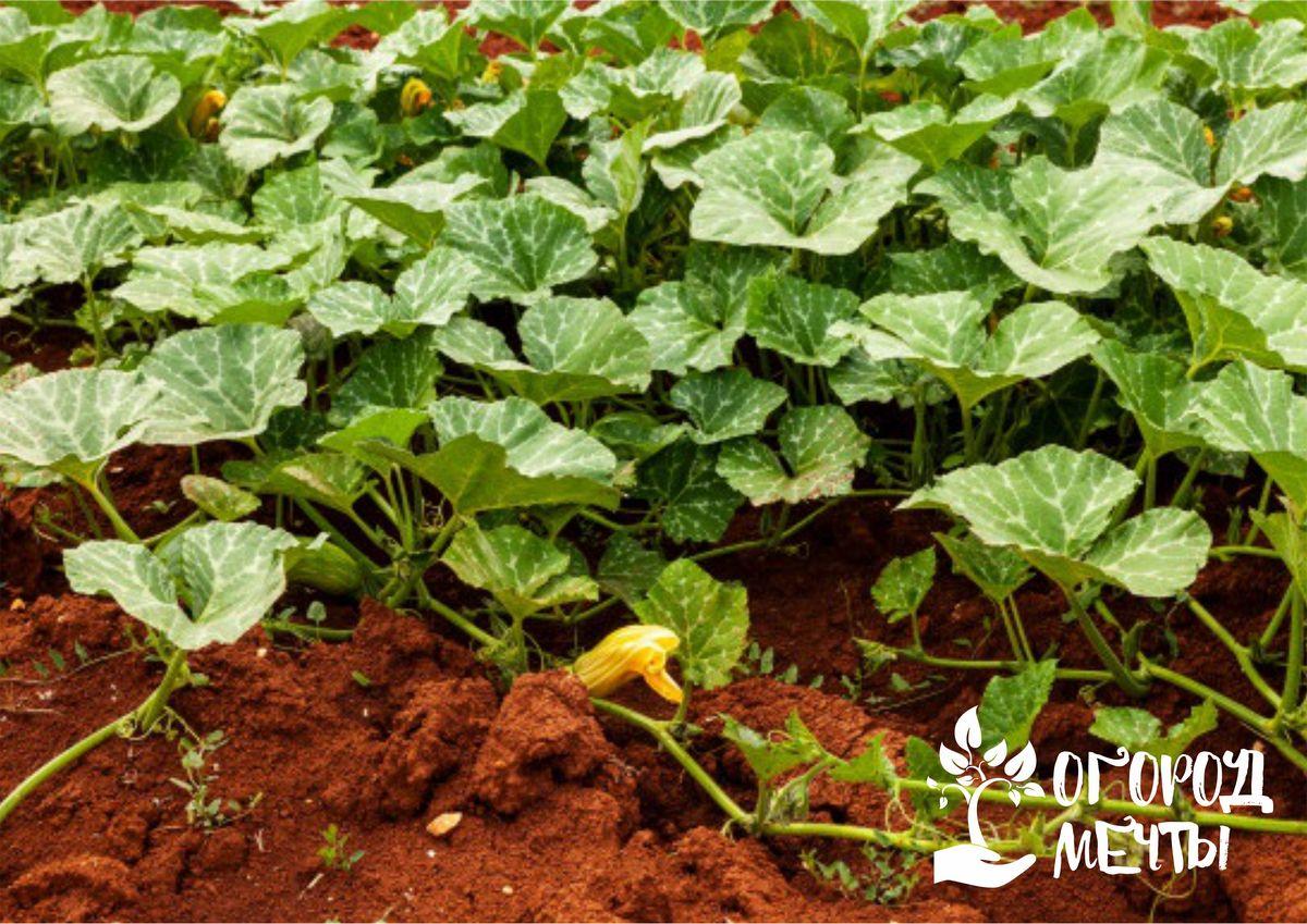 Что делать в огороде в июле: список дел