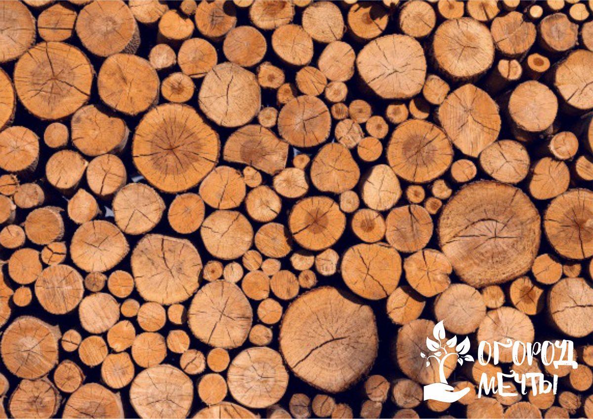 Древесный спил как украшение для дачного участка: топ-5 вариантов интересного декора