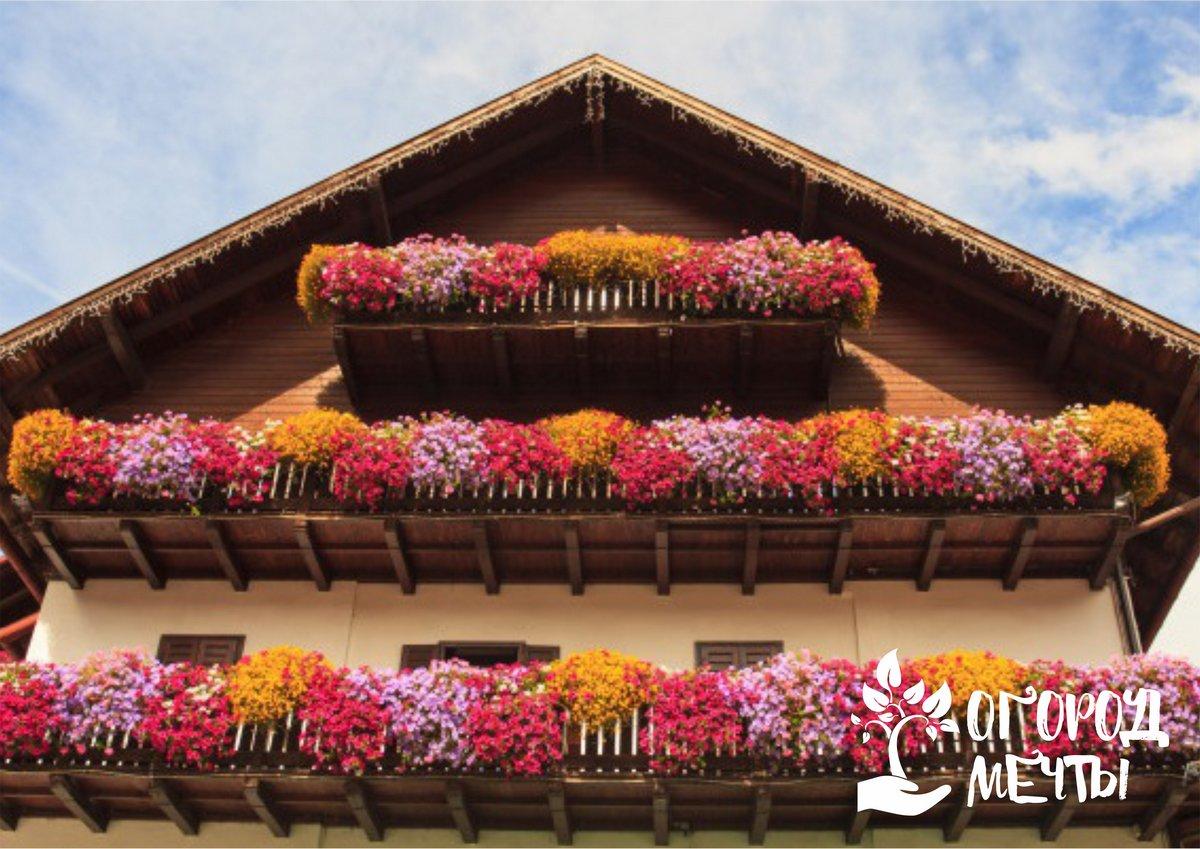 Цветы для балконного выращивания на даче