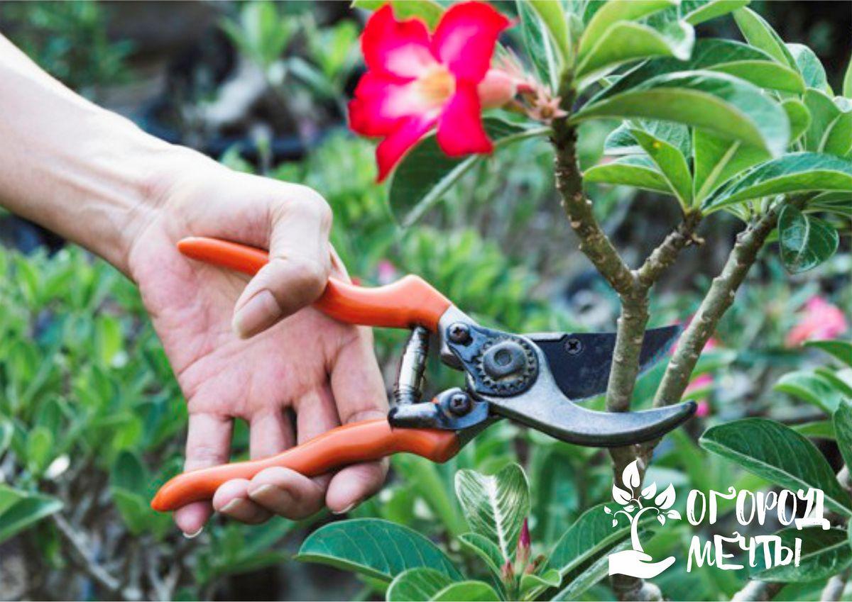 Лучшие приемы летней обрезки плодового сада