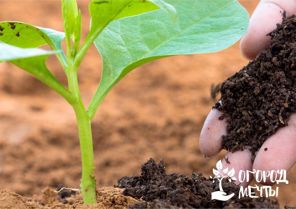 Применение компоста: топ-6 способов
