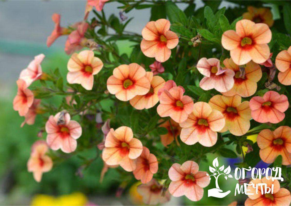 Специфика украшения дачи ампельными растениями