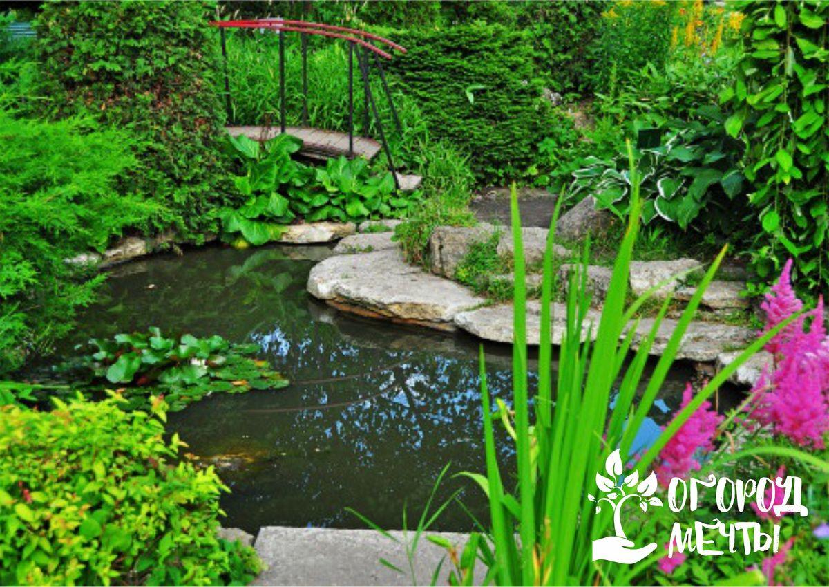 Уход за садом в июле: самые важные мероприятия
