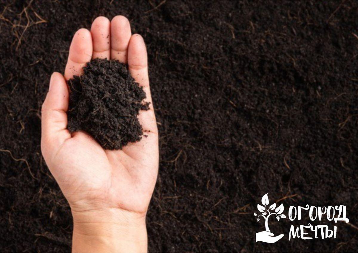 Применяем компост с пользой: топ-6 эффективных способов применения органики на даче