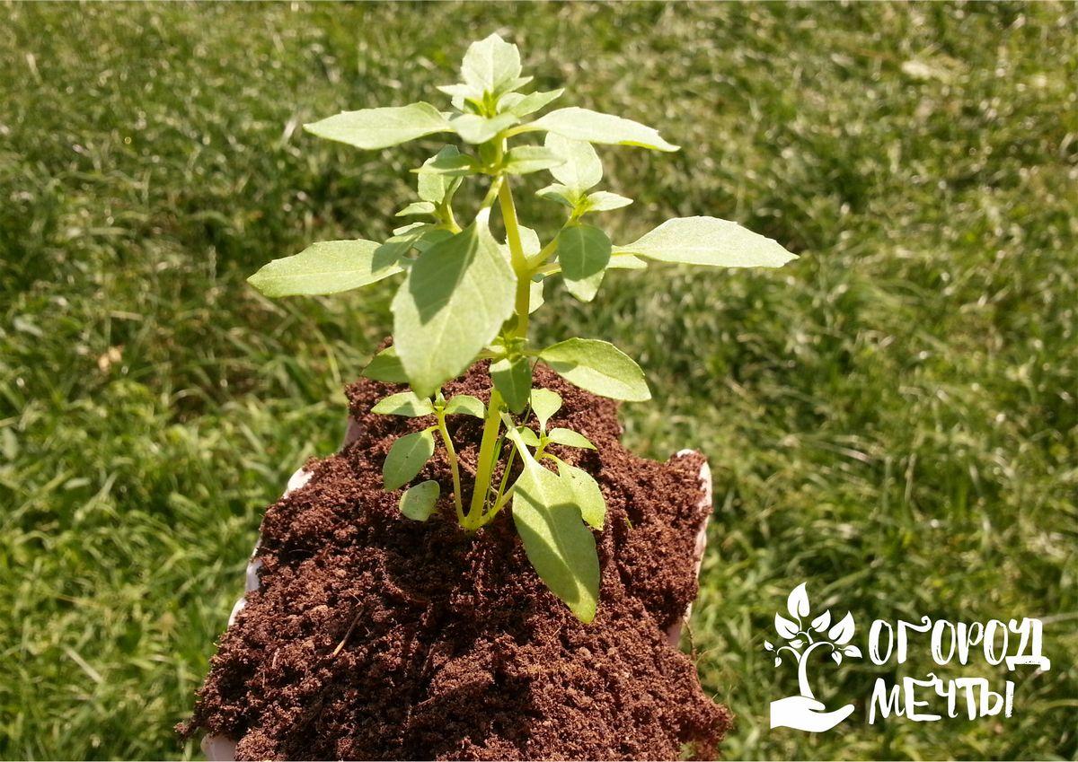 Как улучшить качество почвы в своем саду