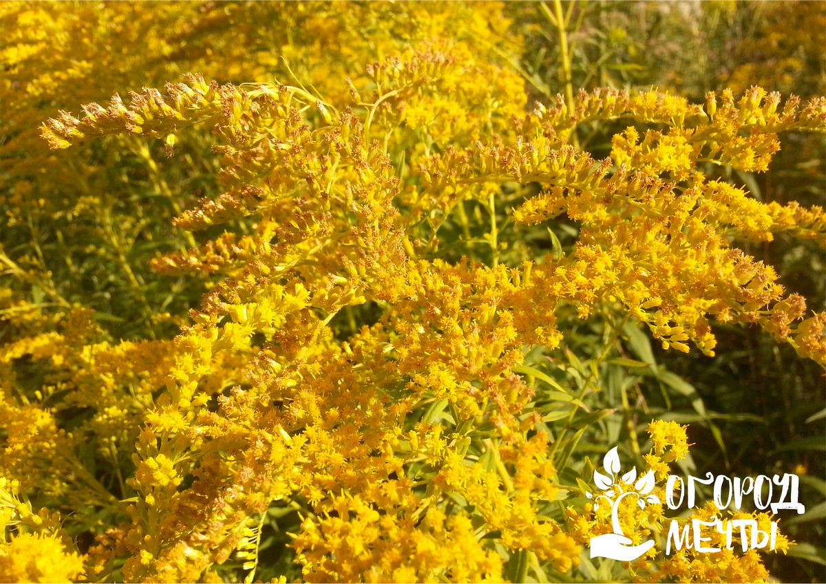 Топ-15 трав и специй с удивительными свойствами