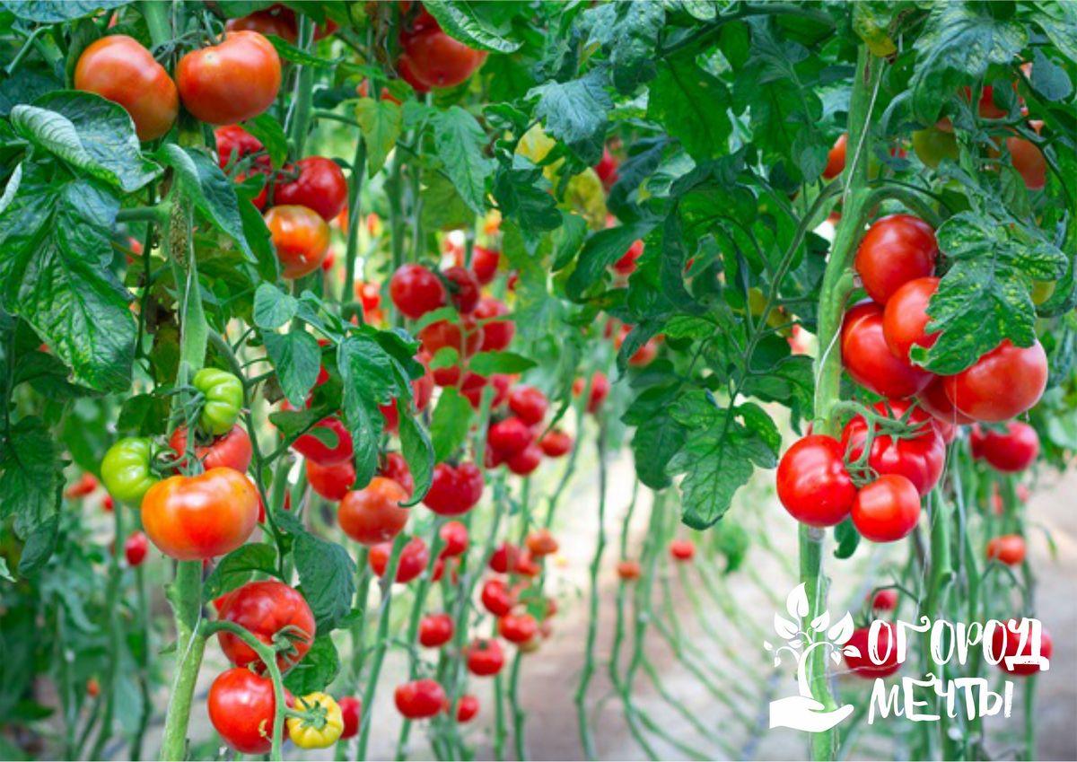 Десять мероприятий августа для огородника