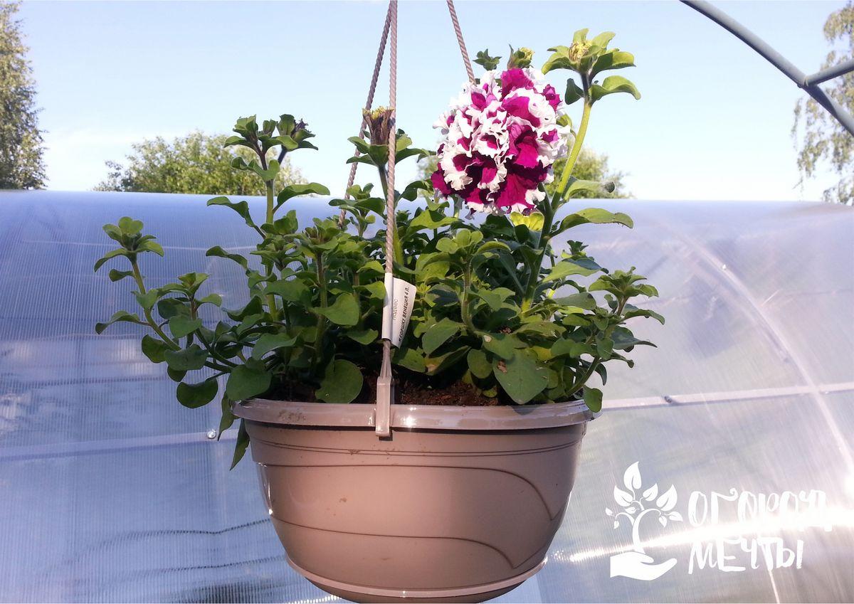 Как защитить растения от палящего солнца