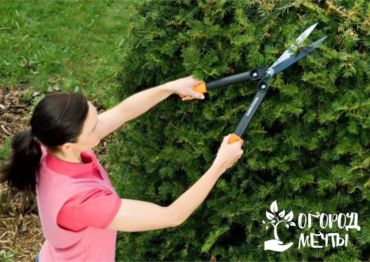 С этим инструментом вашей изгороди будут завидовать все соседи! Как выбрать лучшие садовые ножницы для подрезки кустарников