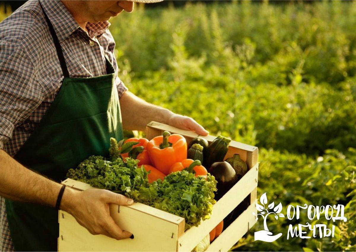 Грядки на огороде пустеют после уборки чеснока? Поселите на них эти урожайные растения!