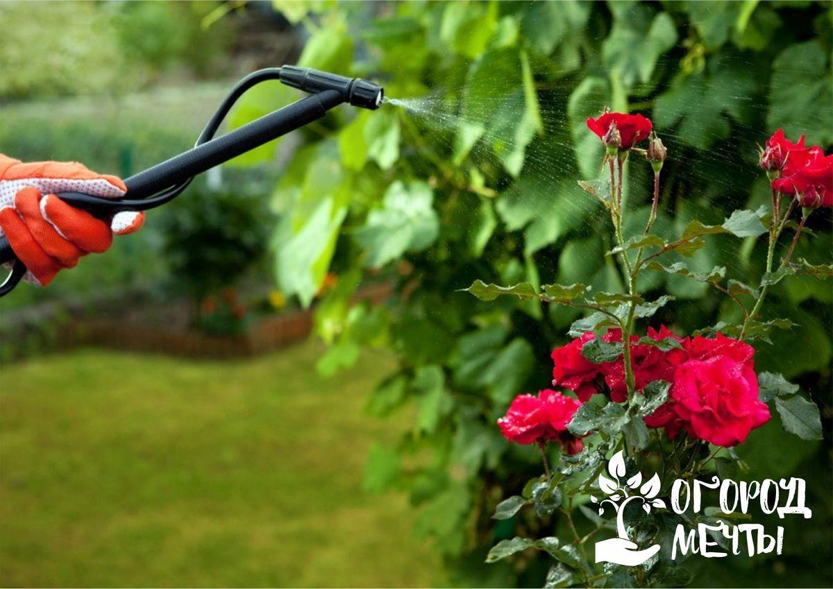 Сорняки - друг дачника? Семь сорняков, которые избавят ваш огород, цветник и сад от вредителей!