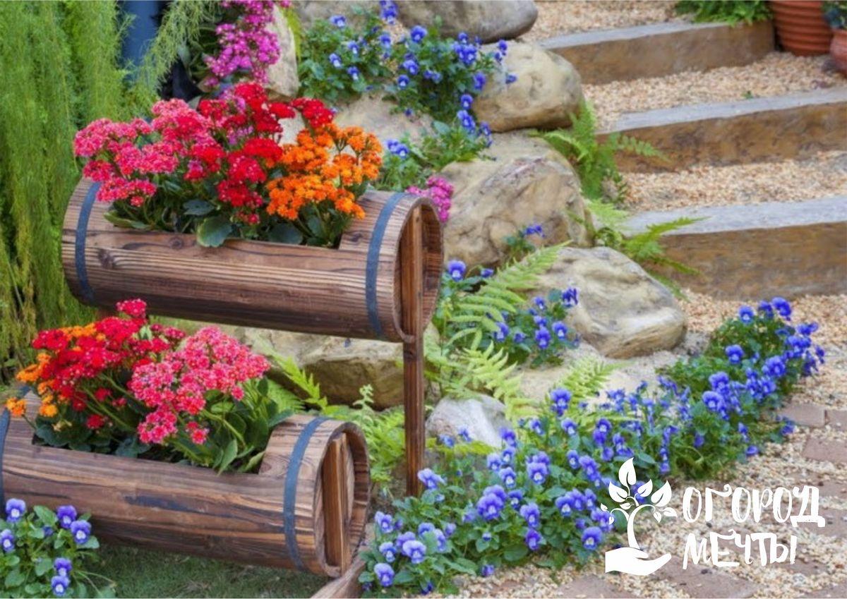 Топ-9 растений, которые можно посадить в цветнике в августе