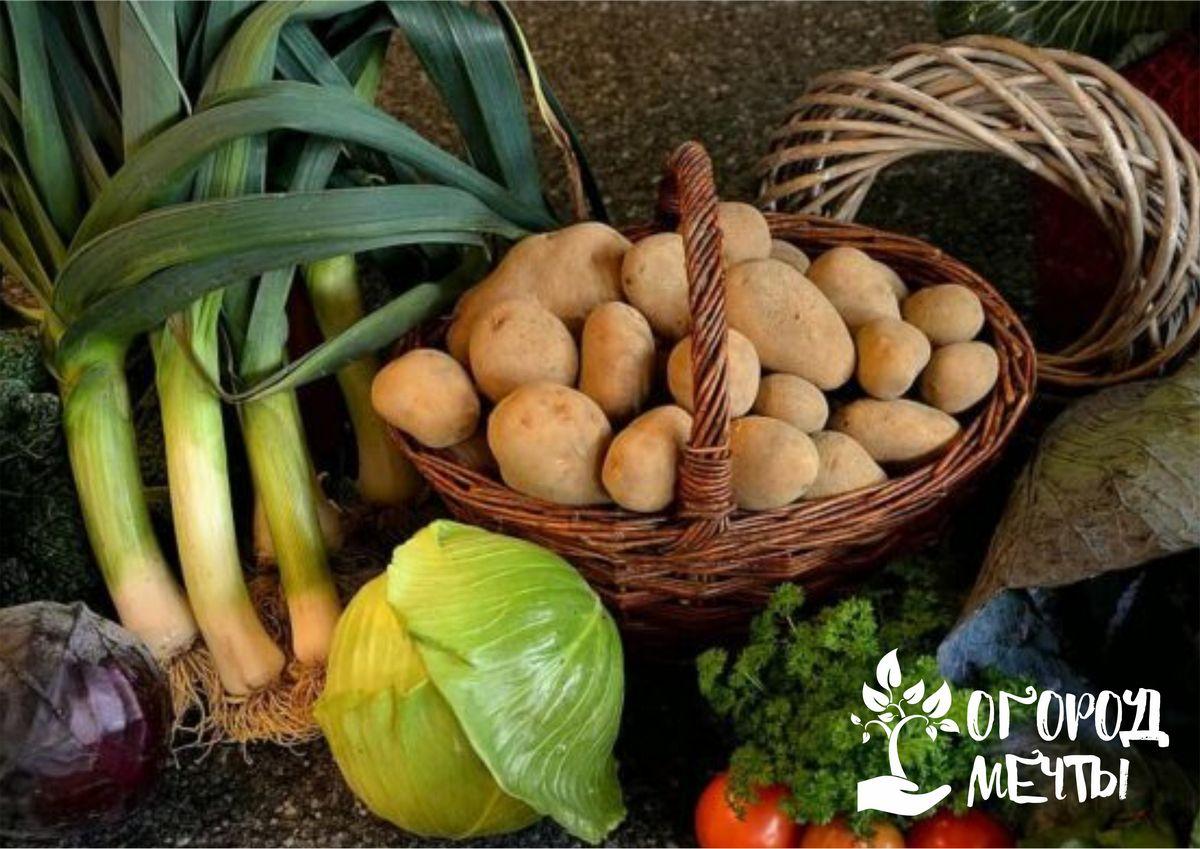 Уборка урожая в августе уже в самом разгаре! Делимся секретами правильной уборки овощей на огородных грядках