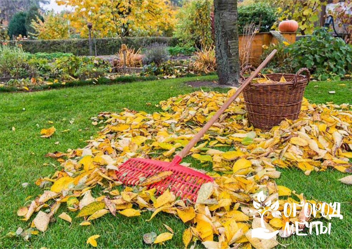Топ-10 мероприятий для садовода, которые нужно провести в сентябре